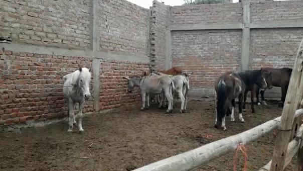 En el inmueble se hallaron cinco caballos y tres burros que iban a ser sacrificados.