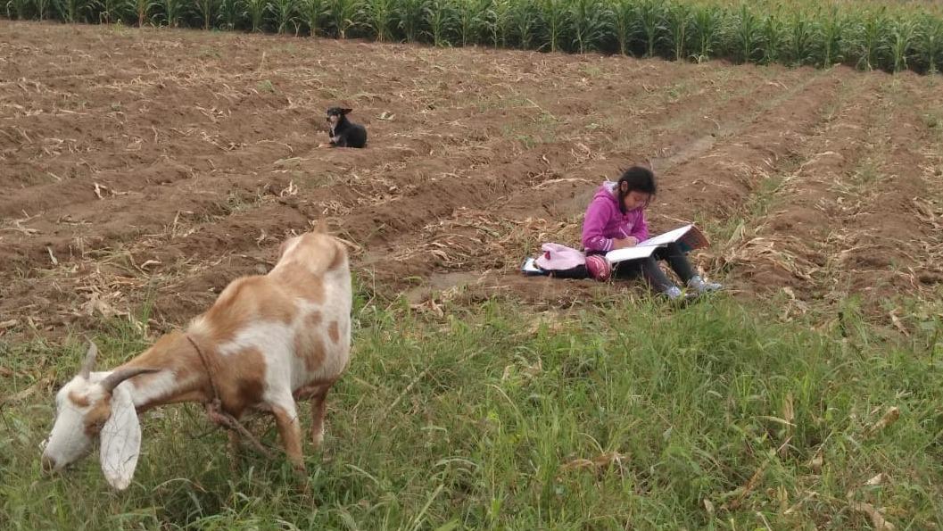 La pequeña Naomi aprovecha en estudiar mientas cuida a su ganado. Es un digno ejemplo de imitar.