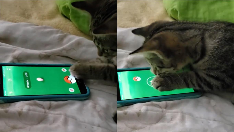 El pequeño felino es una sensación en las redes sociales.