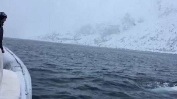 Ballena Beluga en el Polo Sur.