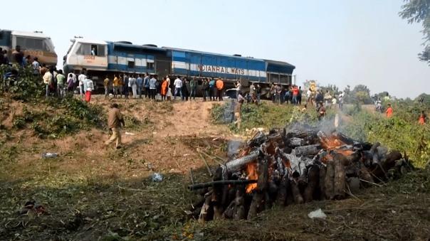 En los últimos cinco años, al menos 26 elefantes murieron y muchos más resultaron heridos por trenes.