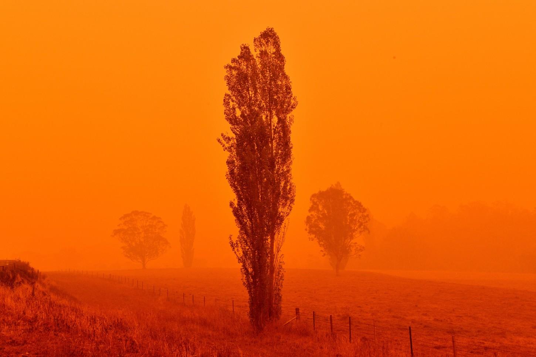 Australiaestá acostumbrada a losincendios forestalesdurante el verano,sin embargo este año llegaron antes de lo habitual y son muy violentos debido a una sequía prolongada.