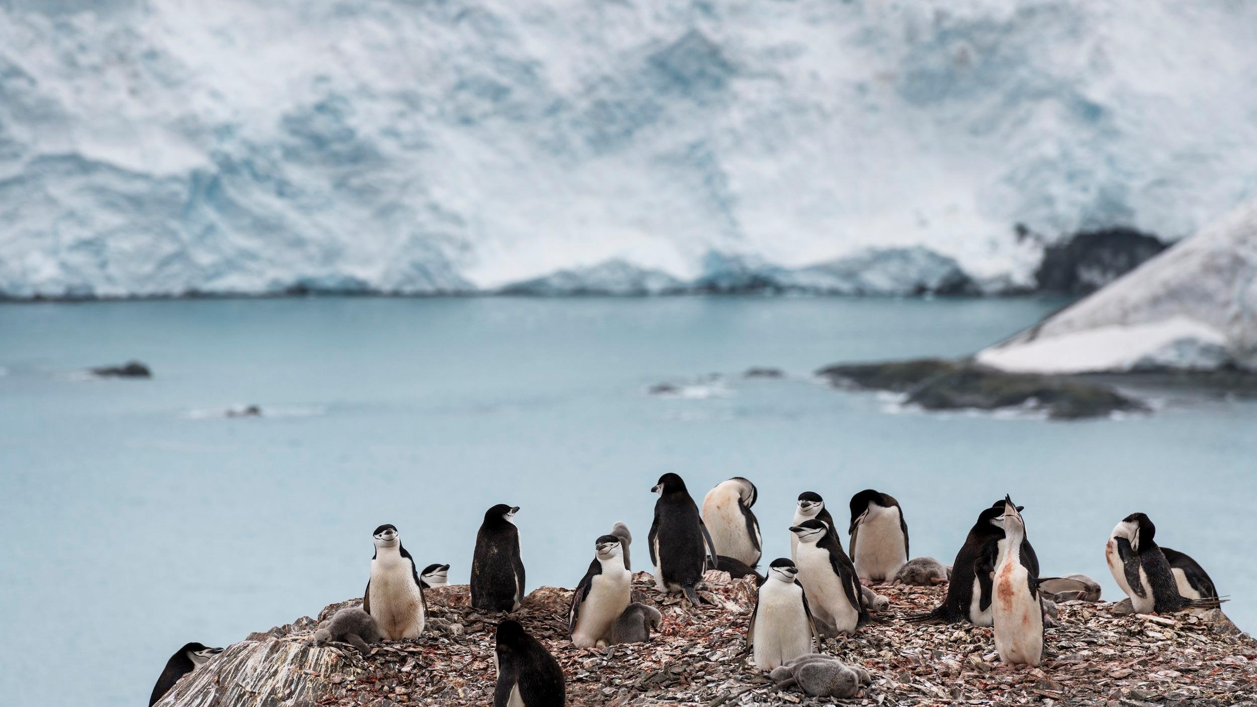 Lo que preocupa a los científicos es que la especie de mosquitos provenga de una zona fría y que ya esté preadaptada a las condiciones de la Antártida.