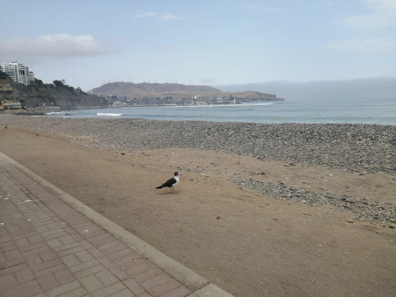 Una de las encargadas de la limpieza pública indicó a RPP Noticias que las plumas y desperdicios de aves se ha incrementado en estos días.