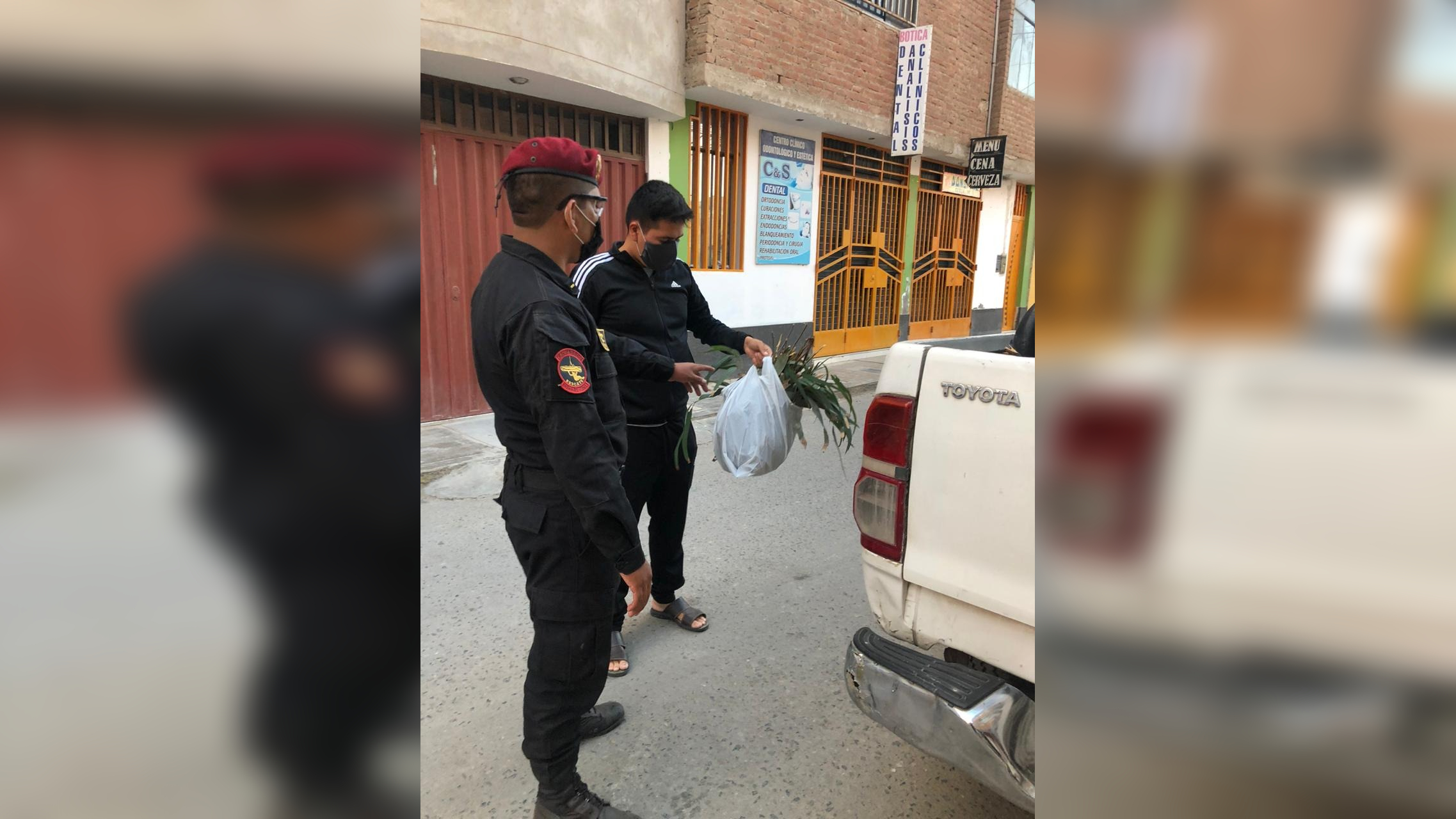 Entrega de eucalipto a policías en sus viviendas