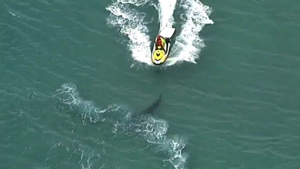 Hombre en moto acuática trata de espantar al tiburón.