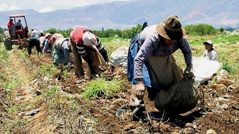 FREPAP plantea declarar en emergencia sector agrario.