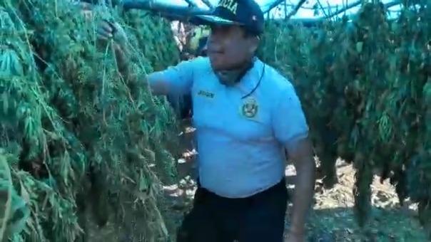 En el lugar también habían chozas donde se secaba la marihuana.