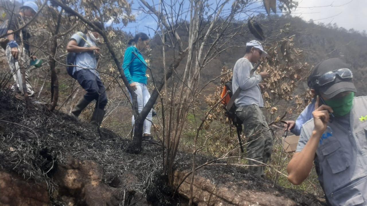 Tres grupos de brigadas hacen esfuerzos para apagar el incendio.