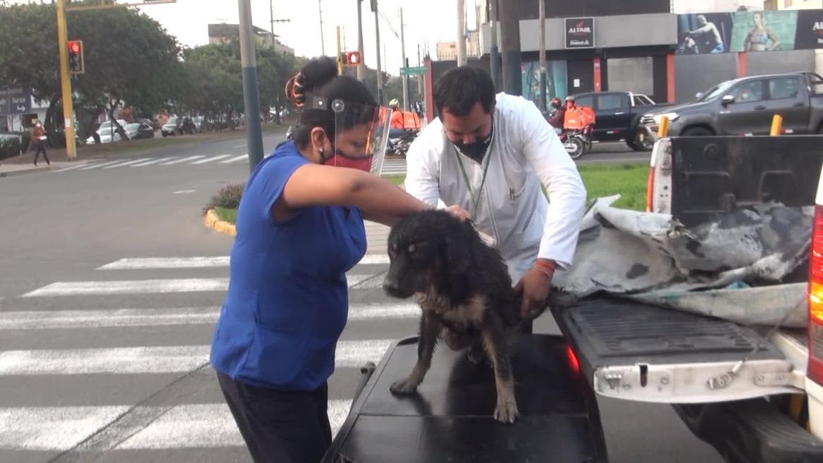 Animal recibió oportuna ayuda.