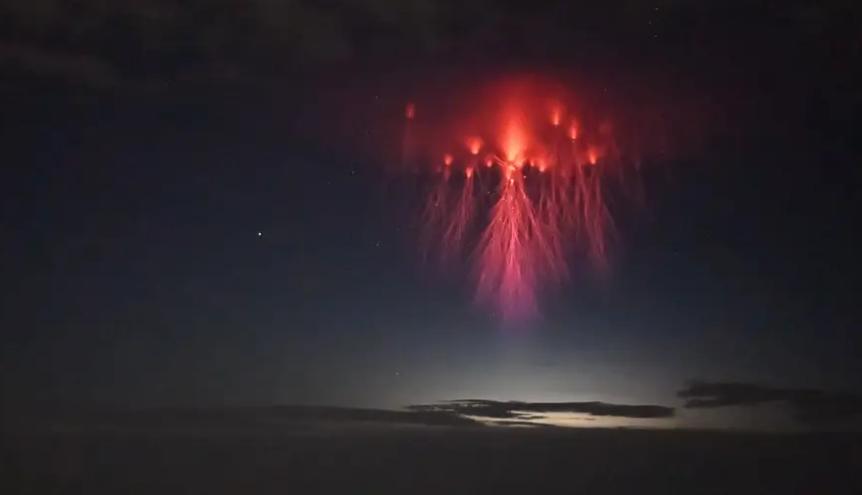 Medusa roja