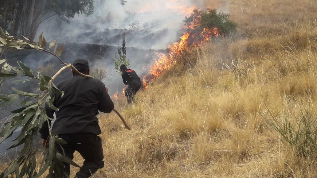 El fuego afectó pastizales, bosques y plantaciones en las diversas localidades de Junín.