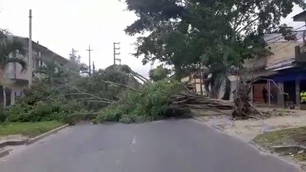 En varias calles el tránsito se vio interrumpido debido a que los árboles cayeron a la pista.