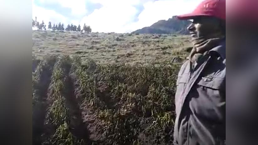 Desde la comunidad de Cajatamabo, el agricultor Máximo Hipólito contó que 35 familias han perdido su producción.