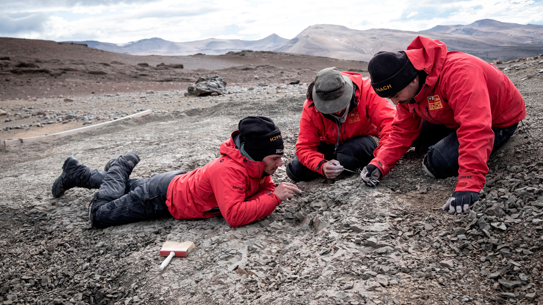Investigadores recuperan restos fósiles de Orretherium tzen (Bestia de cinco dientes), en el Valle de Las Chinas, Magallanes (Chile).
