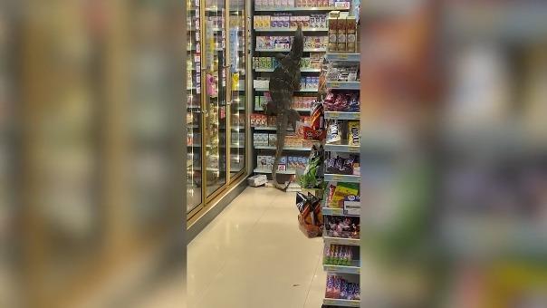 Un lagarto monitor es captado trepando estantes en un supermercado de Tailandia.