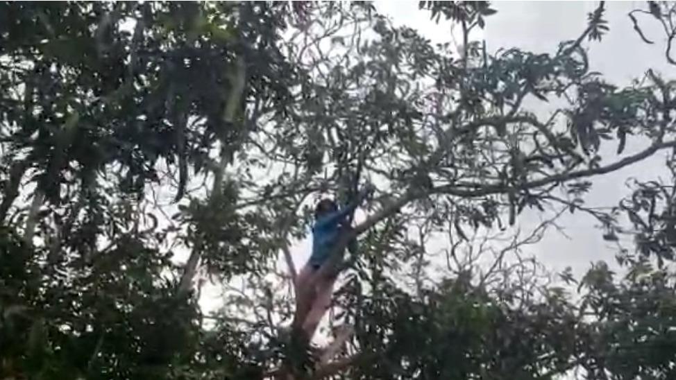 Niña pidió a las autoridades colocar una antena para captar señal de internet.