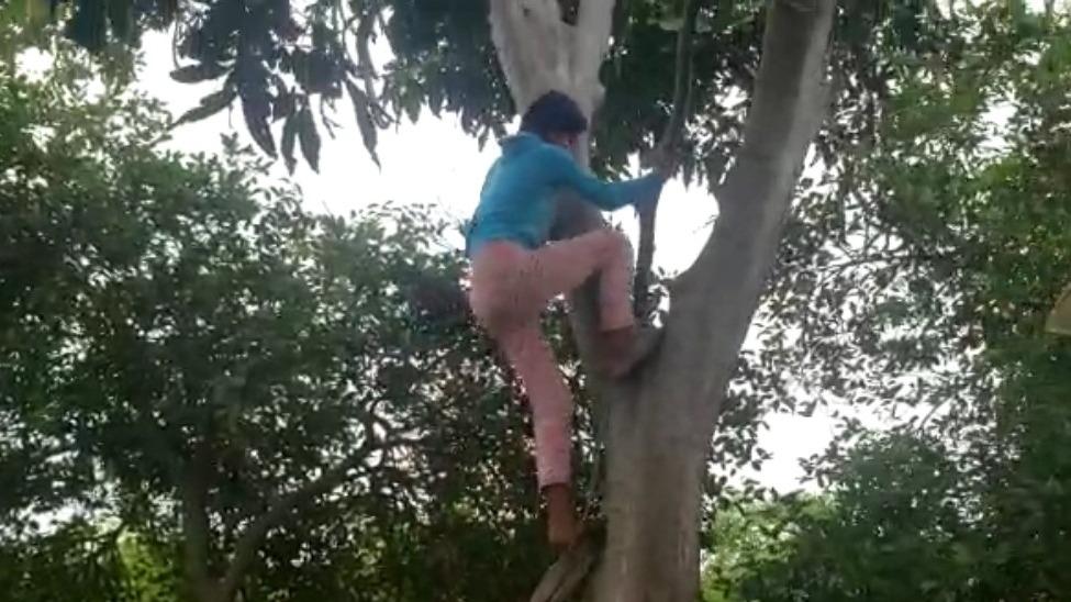 Niña pone en riesgo su vida al trepar todos los días a planta de guabo para captar señal en su celular y de esta manera seguir sus clases.