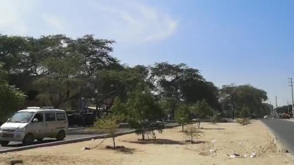 Luego de varios meses, así lucen las zonas donde estos jóvenes han plantado árboles.