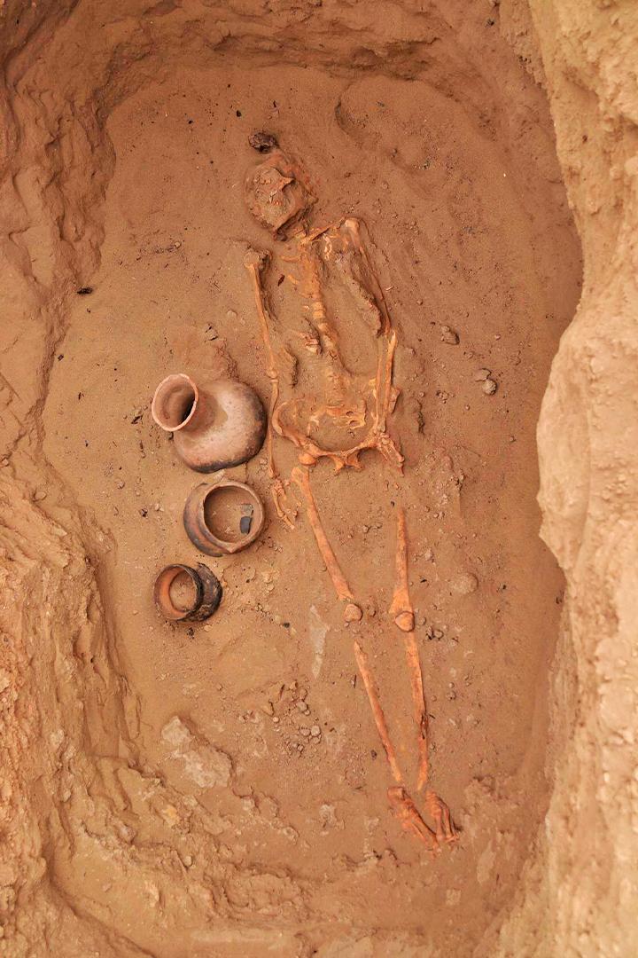 Descubren restos de niños y camélidos en huaca Santa Rosa en Pucalá